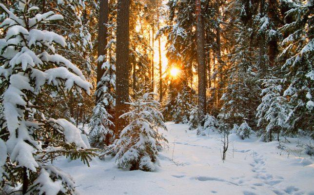Karácsonyi erdő