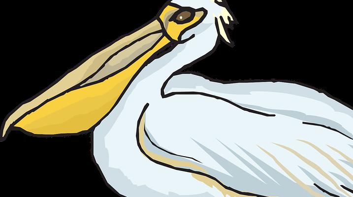 A pelikánmadár