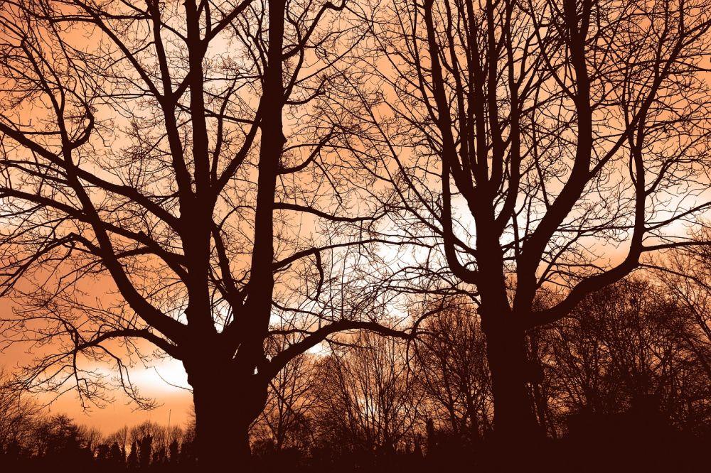 Téli fák