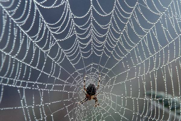 A pók meg a légy