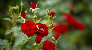 Nőnapi virág