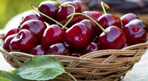 Ropogós cseresznye
