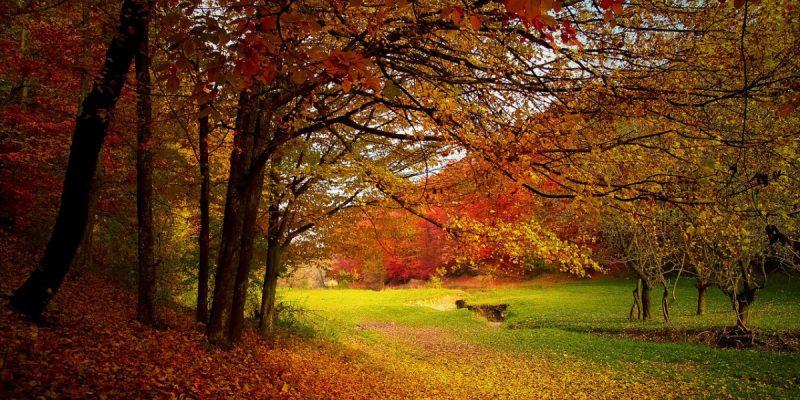 Jön az ősz