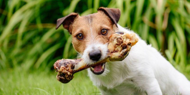 A kapzsi kutya
