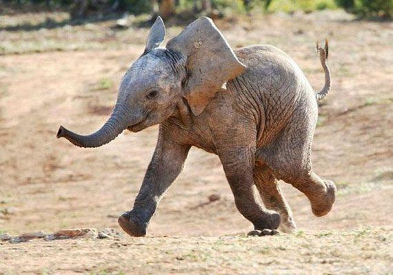 Elefánt-mese