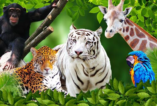 Tréfás állatkerti útmutató
