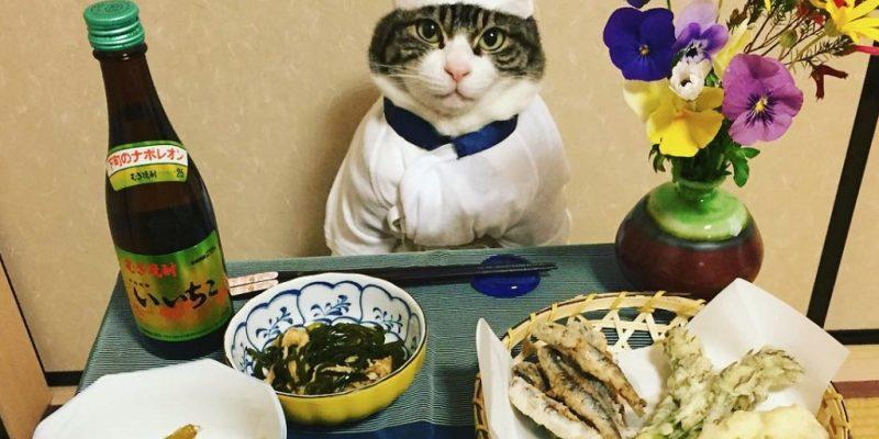 Macska mint szakács