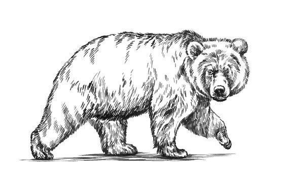 A loncsos medve